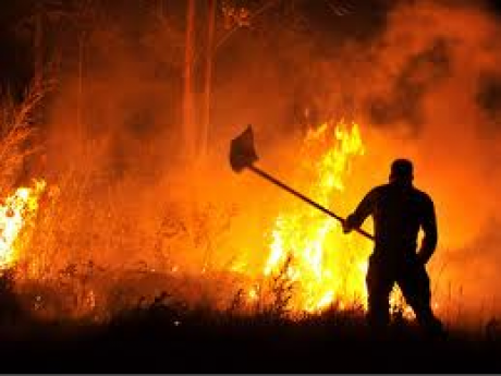 "Un estudio sobre incendios forestais, premio de investigación ""Valentín Paz Andrade"" 2014"